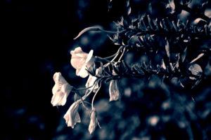 Blüten Split-Toned