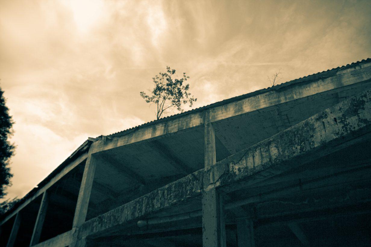 Dachbegrünung Split-Toned