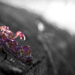 Ein Mauerblümchen