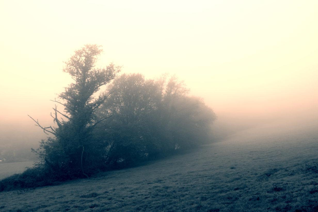 Hain im Nebel